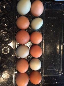 Mary's Hand Gathered Eggs